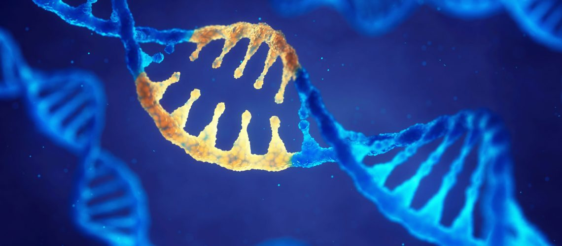 Gene Therapy Could Help Prevent Adult-Onset Hearing Loss